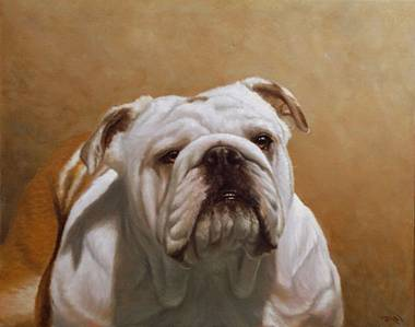 Our Bulldogs are from Australian, English, South African , Swedish ...