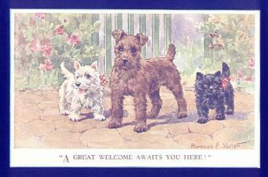 Scottish terrier club queensland