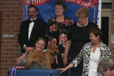 Winning 2008 terrier of the year