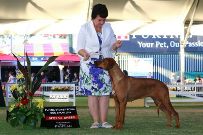 Disa wins Best of Breed Sydney Royal 2014