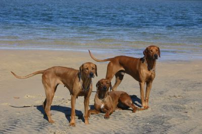 Gus, Peggy and Safi at Inskip Point 2011
